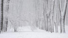 Snöfall i vintern i skogen, mjuk snöig julmorgon med fallande snö lager videofilmer
