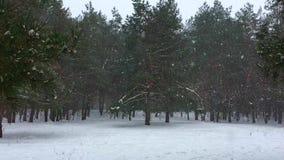 Snöfall på en bakgrund av sörjer träd lager videofilmer