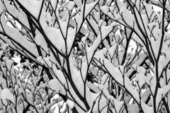 Snöfilialer Royaltyfri Fotografi