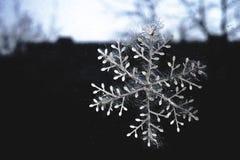 Snöflinga Royaltyfri Fotografi