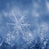 Snöflinga som klibbas i frost Arkivbilder