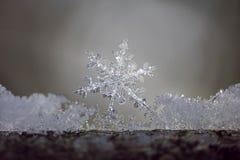 Snöflingafilial Royaltyfri Foto