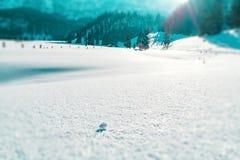 Snöflingor gillar skimrande diamanter i Gnade Alm arkivfoto