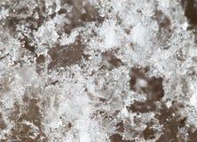 Snöflingor på jordningen supermakrosommar för 2009 blomma Arkivbild