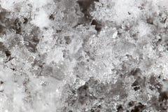 Snöflingor på jordningen supermakrosommar för 2009 blomma Fotografering för Bildbyråer