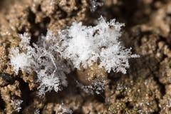 Snöflingor på jordningen supermakrosommar för 2009 blomma Arkivbilder