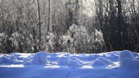 Snöflingor som faller i ljust solljus på vintersnö, täckte staketet i bygd Defocus effekt stock video