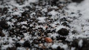 Snöflingor som faller på den mörka jordningen, handheld kamera arkivfilmer