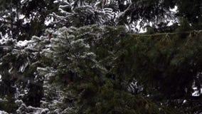 Snöflyget över sörjer från sidan träd lager videofilmer