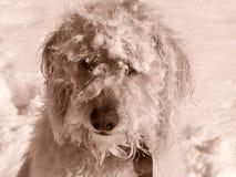 Snöframsida Teig Arkivfoton