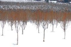 Snöfruktträdgård Arkivbilder