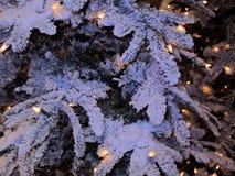 Snögran förgrena sig med gula lampor Arkivbilder