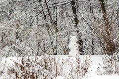 Snögubben står i vinterskogen som göras av handen arkivfoto