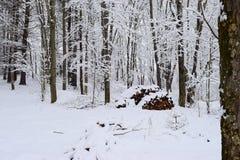 Snöhäftig snöstorm 2015 royaltyfri fotografi