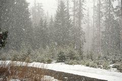 Snöhäftig snöstorm i skogen Royaltyfri Bild