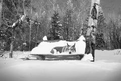 Snöhund på en parkerabänk royaltyfri bild