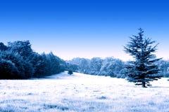 Snöig äng Royaltyfria Bilder