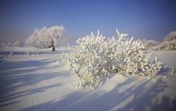Snöig Royaltyfria Bilder
