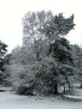 snöig Arkivbilder