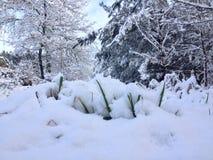 snöig Arkivbild