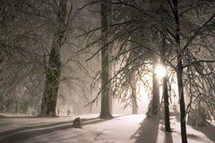 snöig aftonskogliggande Royaltyfria Bilder