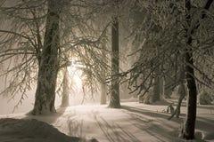 snöig aftonskogliggande Arkivfoton