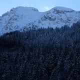 Snöig alpin pinjeskog royaltyfria bilder
