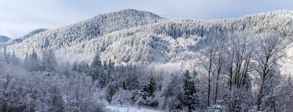 Snöig alpin skog under soluppgång arkivfoto