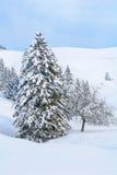 Snöig alpint träd på en ursprunglig vinterdag Arkivbild
