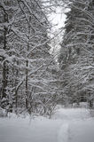 Snöig bana i skogen royaltyfria foton