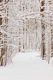 Snöig bana i trän, naturlig bakgrund Royaltyfri Fotografi