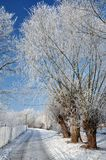 Snöig bana med träd och elektriska lampor Arkivbild