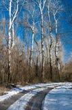 Snöig bana till och med skog i vinter Arkivbild