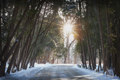 Snöig bana till och med skogen på en solig dag Royaltyfria Bilder