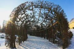 Snöig bana till och med vinterskog Royaltyfria Bilder
