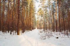 Snöig bana, väg, väg eller bana i vinterskog Royaltyfria Foton