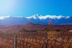 Snöig berg för San Lorenzo maximum Vintervingårdvinrankor La Rioja arkivbild