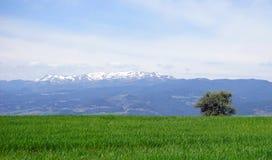 Snöig berg i Turkiet Arkivbild