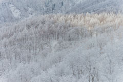 Snöig berg landskap, Japan Royaltyfri Foto