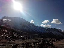 Snöig berg med solljus Royaltyfria Foton