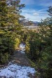 Snöig bergbana till och med bokträdskog Royaltyfria Foton