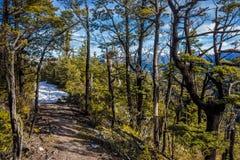 Snöig bergbana till och med bokträdskog Royaltyfri Bild