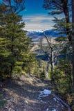 Snöig bergbana till och med bokträdskog Arkivfoton