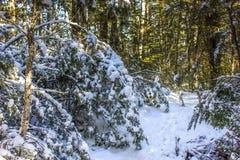 Snöig bergbana till och med bokträdskog Arkivbilder