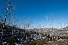 Snöig berghuvudväg Fotografering för Bildbyråer