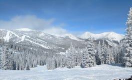 Snöig bergsida Colorado royaltyfri fotografi
