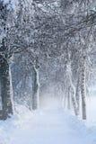 Snöig björkbana II Royaltyfri Foto