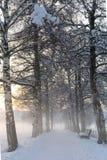 Snöig björkbana III Royaltyfria Foton