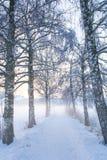 Snöig björkbana V Royaltyfria Foton