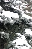 snöig brench 4 fotografering för bildbyråer